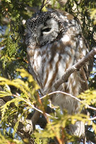 Boreal owld20.02.05_72ppi