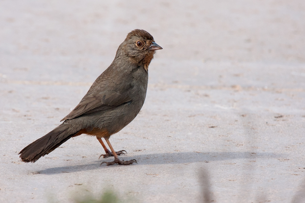 california-towheeb020510_72ppi